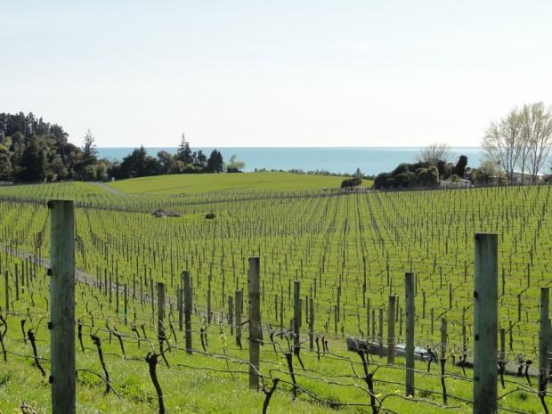 Vineyard Rolling Hills