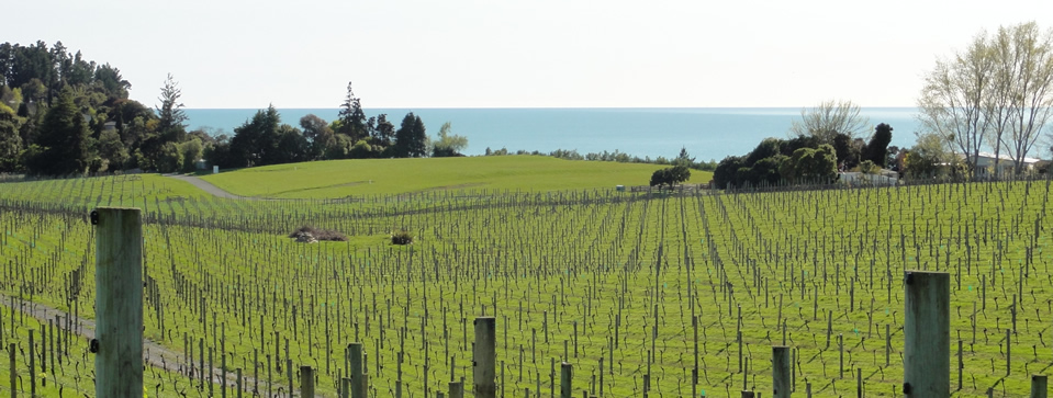Rolling Hills – Vineyard View to the Sea